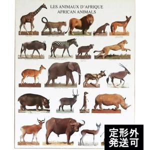 『NOUVELLES IMAGES AFRICAN ANIMAL ヌーベルイマージュ アフリカンアニマル』ポスター サイズ50×40cm|t-home
