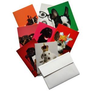 【アウトレット】ミニグリーティングカード8セット エトランジェ・ディ・コスタリカ どうぶつ|t-home