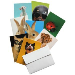 【アウトレット】グリーティングカード8セット エトランジェ・ディ・コスタリカ どうぶつ|t-home