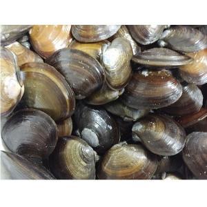 アケミ貝(国産)1kg (M) ☆ポイント全額払い不可