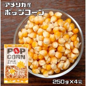 豆力 豆専門店のポップコーン 1kg |tabemon-dikara