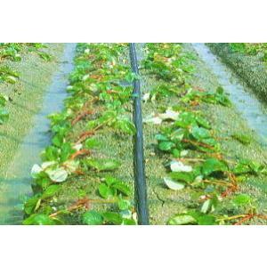 折径50mm、直径28mm×100m  散水範囲・点滴〜3.6m ●果実類・イチゴ、トマト、きゅうり...