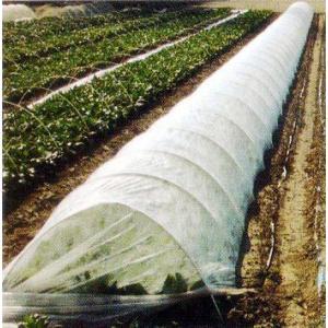 作物の増収、品質向上、前進出荷を可能にするパオパオシリーズは農業 用べたがけ資材の代名詞です。 ●光...