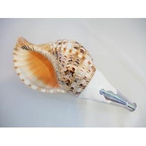 法螺貝・歌口付 サイズ44cm付近 真言タイプ ほら貝 ほらがい|taiko-center