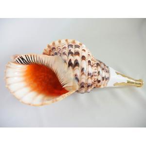 法螺貝・歌口付 サイズ約46cm 真言タイプ 真鍮製唄口 しんちゅうせい ほら貝 ほらがい|taiko-center