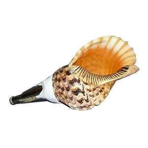法螺貝・歌口付 サイズ42cm-43cm 天台タイプ ほら貝 ほらがい|taiko-center