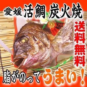 お食い初め 鯛 愛媛 の 活 真鯛 2kgアップ最大級の鯛 を炭火でじっくり、焼鯛 に 祝い鯛に最適...