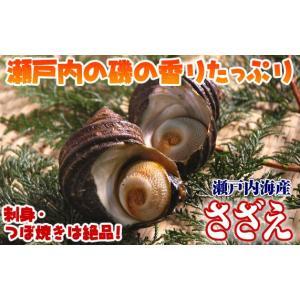 瀬戸内海産 サザエ1個 120g