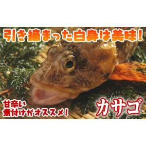 瀬戸内海産カサゴ(ホゴメバル)1尾160g