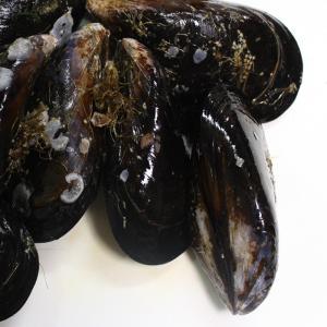 ムール貝って広島でとれるんです!ムール貝を食べる習慣がありませんから広島人でもムール貝の産地が宮島と...