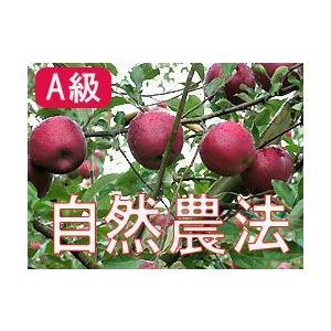 りんご 林檎 リンゴ (A級品)竹嶋有機農園の自然農法りんご 紅玉 (約4.5kg) ※青森県 ※ギ...