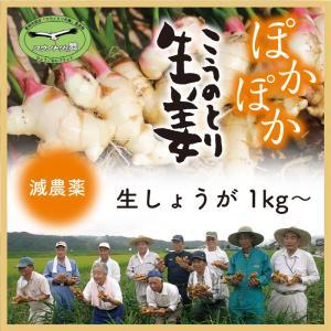 【減農薬】こうのとり生姜 生1kg〜 ひょうご安心ブランド 兵庫県豊岡市産|tajimart