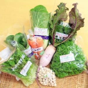 送料無料 旬のごちそう野菜セット6〜7種 国産・兵庫県但馬産など詰合せ 減農薬・ハイブリッド農法 おうちごはん|tajimart