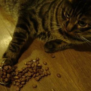 ブラジル ダテーラ農園【コーヒー豆 200g】【レターパックプラス可】|takano-coffee