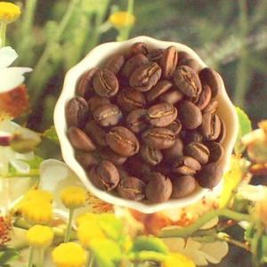 東ティモール カフェ・タタマイラウ【コーヒー豆 200g】【レターパックプラス可】|takano-coffee