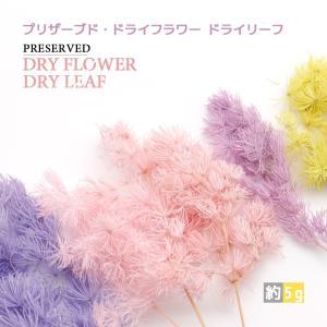 【ITEM DETAIL】 商品名 プリザーブド・ドライフラワー ドライリーフ 重さ   約5g カ...