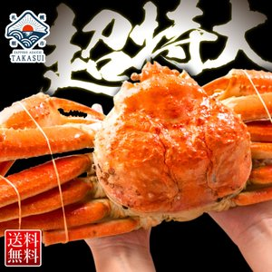 【超特大】ジャンボ ズワイガニ姿1kg前後 ズワイ蟹 ずわいがに ずわい蟹