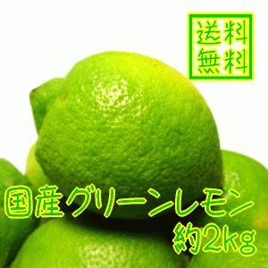 国産(和歌山有田産)グリーンレモン 約2kg(ノーワックス)(防腐剤不使用)(減農薬)