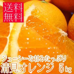 ジューシーな甘みたっぷり清見オレンジ 5kg (不揃い)(和歌山県産) takeore