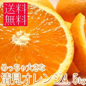 めっちゃ大きな清見オレンジ4.5kg (和歌山県産) takeore