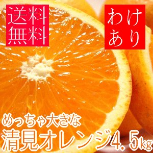 めっちゃ大きな訳あり清見オレンジ 約4.5kg (わけあり 訳あり) (規格外 不揃い)(和歌山県産) takeore