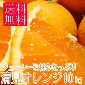 ジューシーな甘みたっぷり清見オレンジ 10kg (不揃い)(和歌山県産) takeore