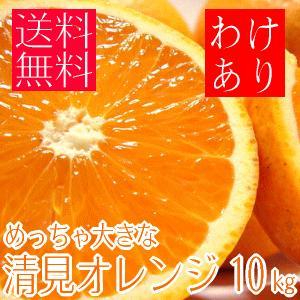 めっちゃ大きな訳あり清見オレンジ 10kg (わけあり 訳あり) (規格外 不揃い)(和歌山県産) takeore
