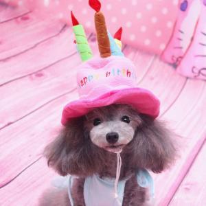 犬用お誕生日パーティ帽子 犬帽子 ハッピーバースデーハット バースディ かぶりもの 仮装 コスプレダックス チワワ プードル ドッグウェア 犬の洋服 takishohin