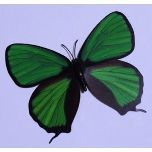 【中国雑貨】 色鮮やかな蝶のマグネット★バタフライマグネット★インテリア小物★【メール便可能】|takouya