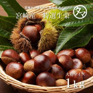 宮崎の特選生栗 大粒サイズ 1kg|tamachanshop