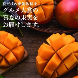 訳あり宮崎完熟マンゴー どっしり800〜1000g詰め 2018年完熟とれたてマンゴーを産地直送|tamachanshop|03