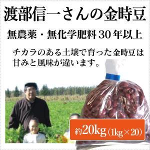 北海道産 無農薬金時豆 - 渡部信一さんの金時豆約20kg(約1kg×20袋) 無農薬・無化学肥料栽培30年の美味しい金時豆 渡部信一さんは化学薬品とは無縁の生産者|tamashii