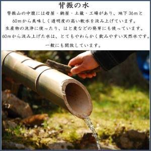 菊芋茶 きくいも茶 国産 2.5gx10袋|tamurafoods|03