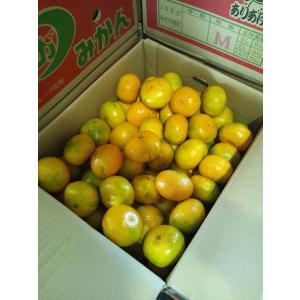 訳あり みかん 佐賀県産 規格外品 1ケース 約10kg|tanakasho-ten|05