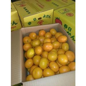 訳あり みかん 佐賀県産 規格外品 1ケース 約5kg|tanakasho-ten|05