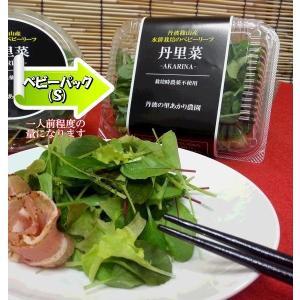 農薬不使用 小さなベビーリーフ 丹里菜Premium-AKARINA-8パックセット|tanba-akari-farm