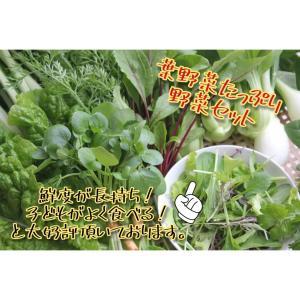 農薬不使用野菜セット 丹波篠山の野菜 火曜日発送 発送曜日変更になりました|tanba-akari-farm