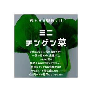 農薬一切不使用 丹波篠山 ミニチンゲンサイ8袋入り 火曜日発送|tanba-akari-farm
