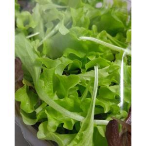 農薬一切不使用 4種のベビーレタスMIX大パック 8袋入|tanba-akari-farm