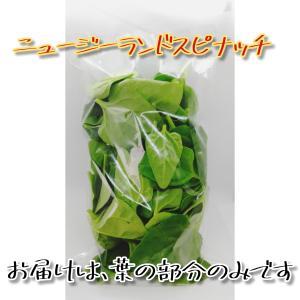 農薬一切不使用 ニュージーランドスピナッチとってもたくさん5袋入|tanba-akari-farm