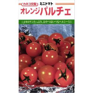 カネコ種苗 トマト オレンジパルチェ 小袋  今日のおやつも、明日のおやつもオレンジパルチェ