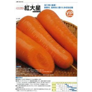 カネコ種苗 人参 ニンジン 紅大星 コート1万粒  加工用に最適! 耐暑性、耐病性に優れた多収型品種