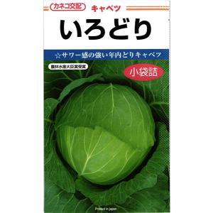 カネコ種苗 キャベツ いろどり 小袋|tanemori-netshop
