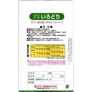 カネコ種苗 キャベツ いろどり 小袋|tanemori-netshop|02