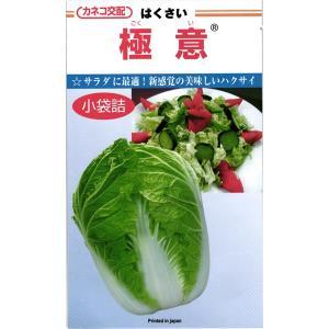 カネコ種苗 ハクサイ 白菜 極意 小袋  サラダに最適!新感覚の美味しいハクサイ