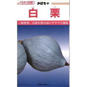 カネコ種苗 カボチャ 白栗 50粒  粉質性、日持ち性の高いナタワリ南瓜