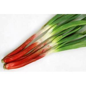 カネコ種苗 ネギ べにぞめ 20ml|tanemori-netshop