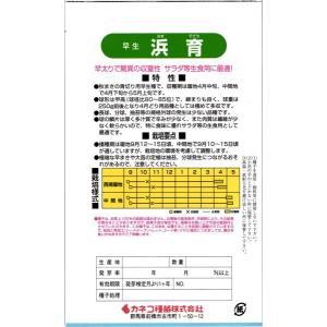 カネコ種苗 タマネギ 玉ねぎ 浜育 コート5000粒|tanemori-netshop|02