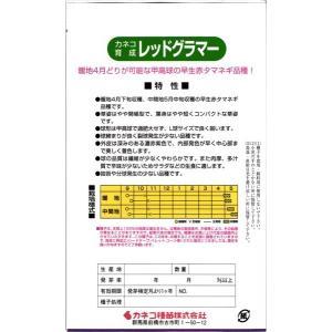 カネコ種苗 タマネギ 玉ねぎ レッドグラマー 小袋|tanemori-netshop|02