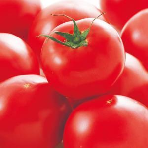 サカタのタネ トマト 麗夏 小袋  極硬玉で裂果に強い、夏秋栽培用品種